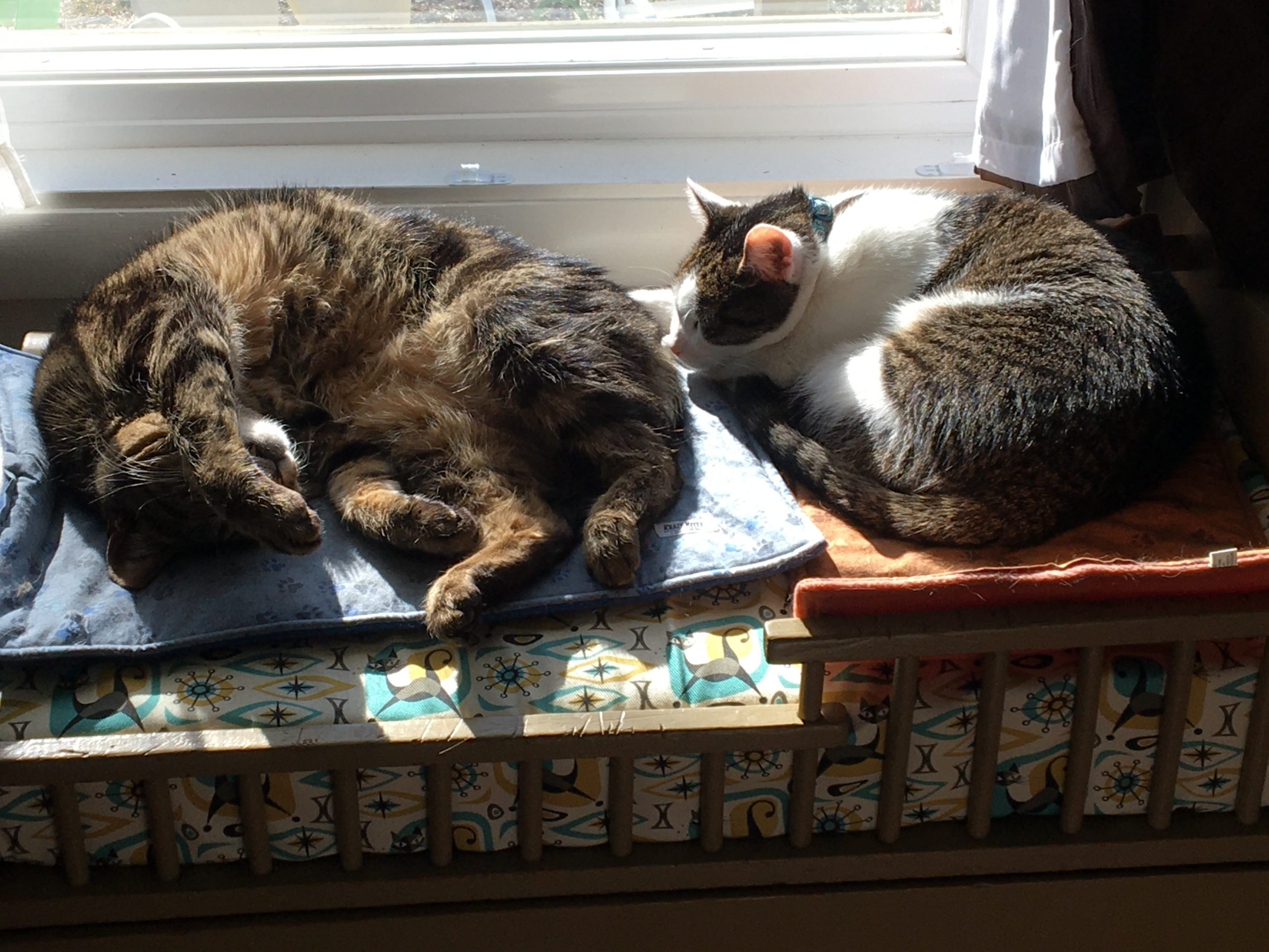 Two cats sleeping in the sun.