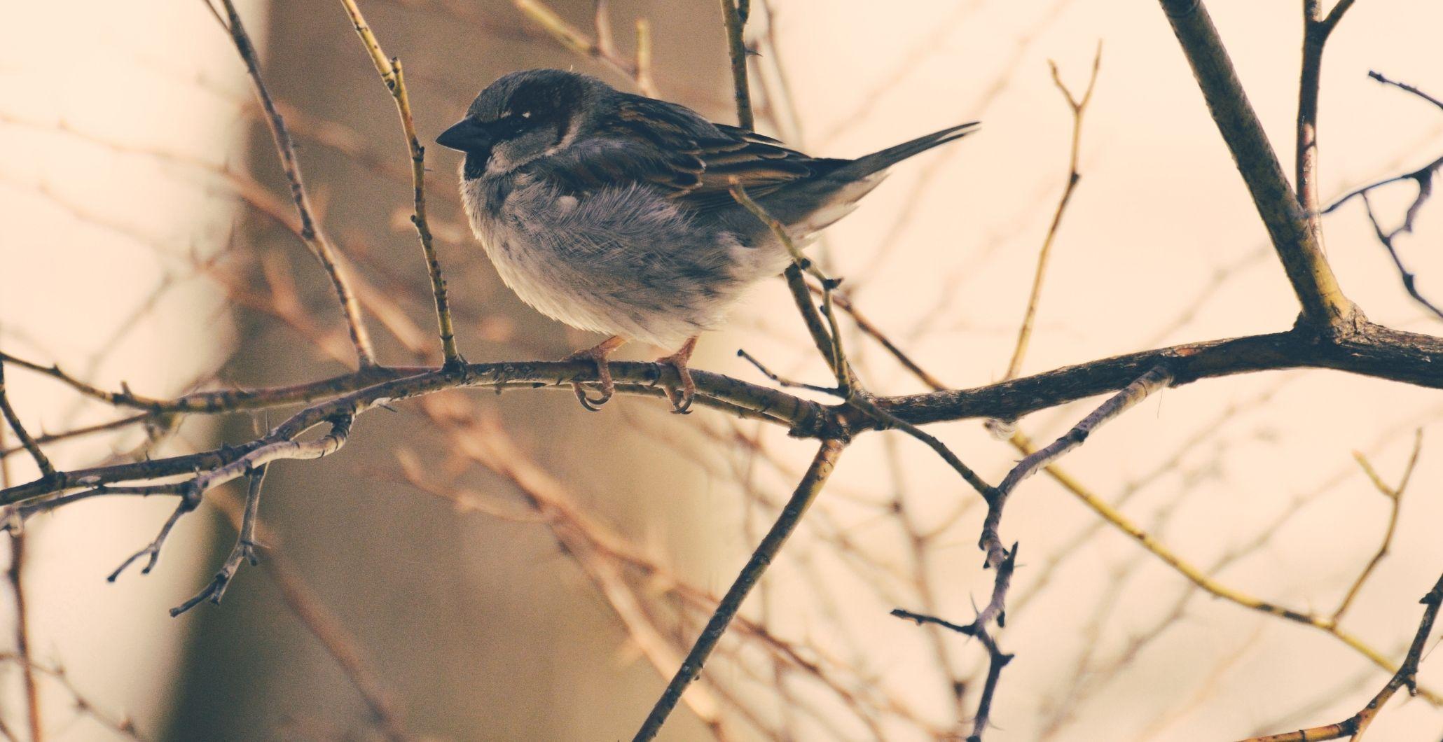 Songbirds of the Northeast