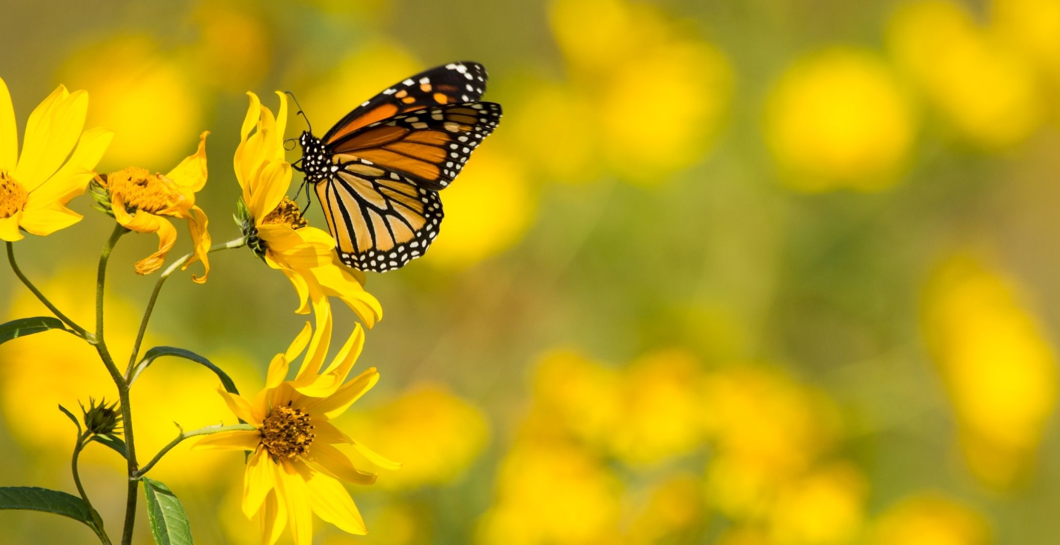 Attracting Birds, Butterflies and Other Beneficials