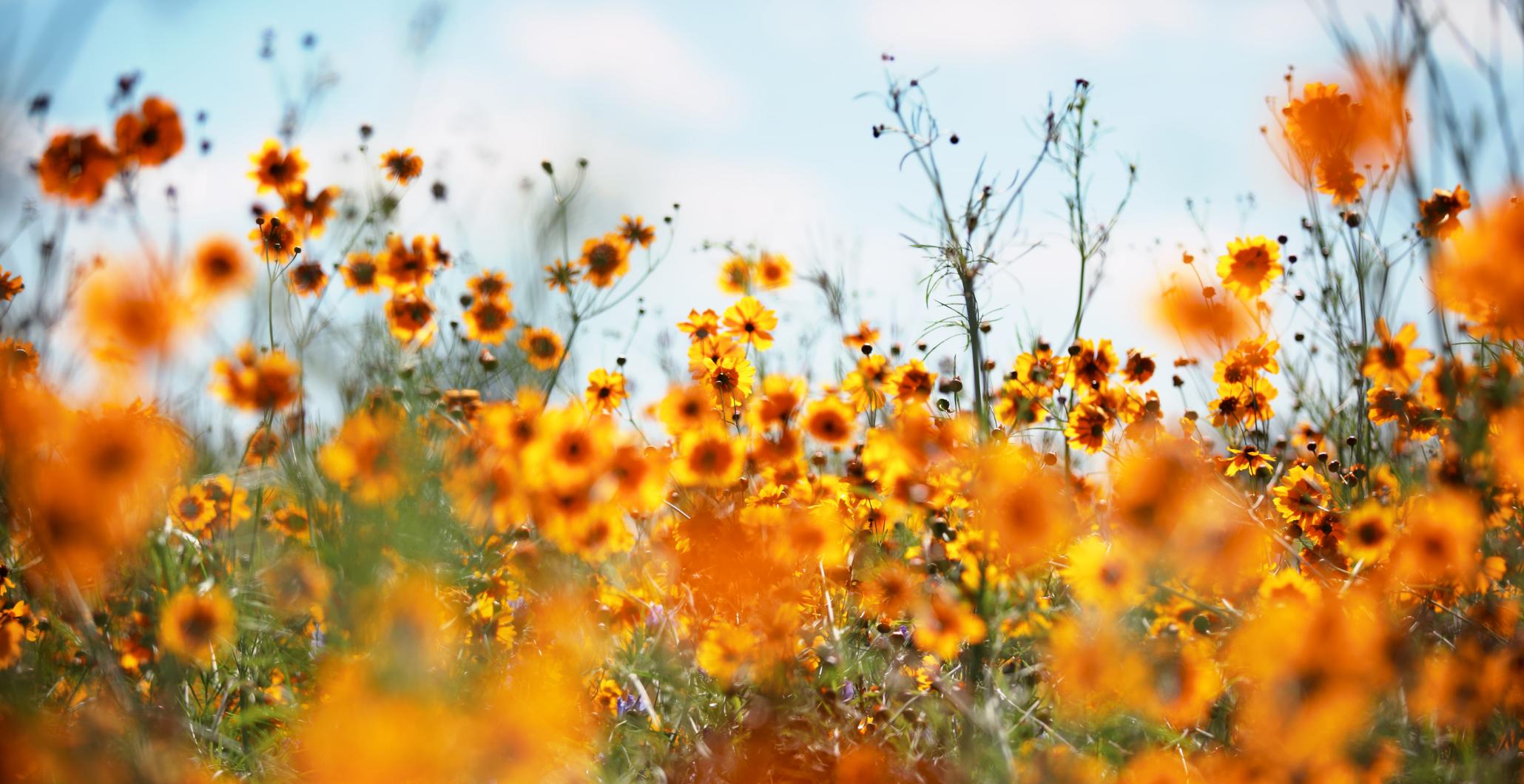 10 Steps to Gardening & Inner Peace