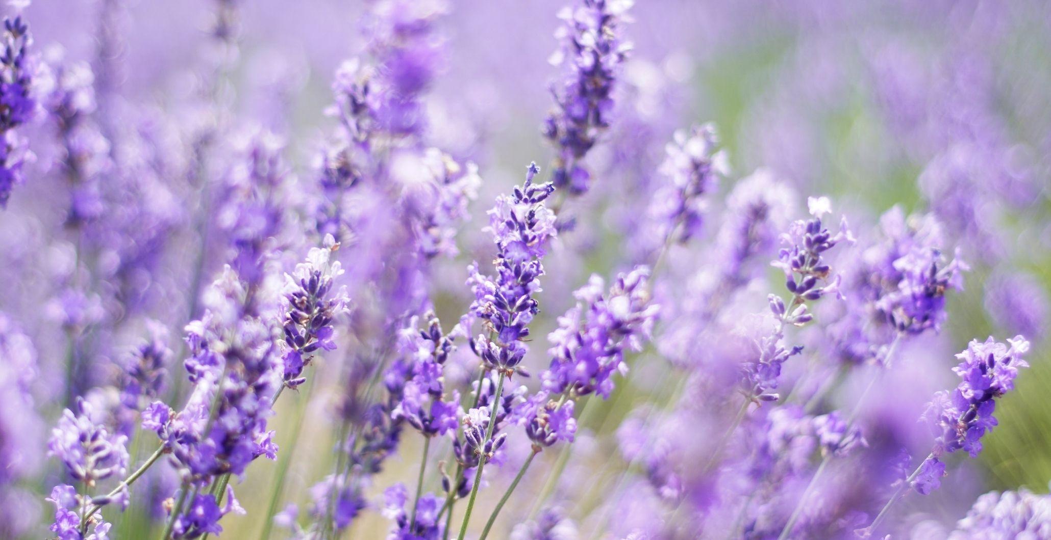 Spice It Up! Lavender