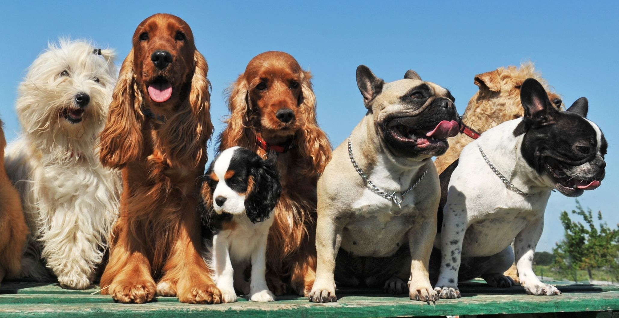 Beyond the Breed: Exploring Dog DNA