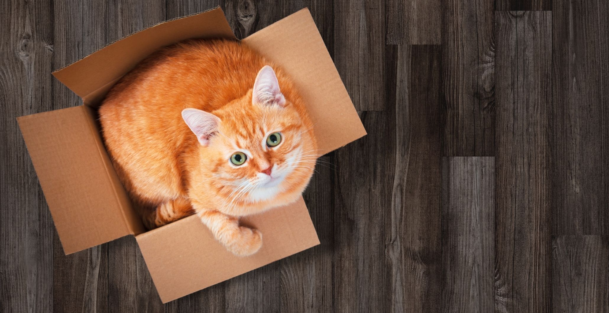 Decoding the Mysteries of Cats, or Why Cats Do What They Do